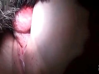 brizilian animal sex videos